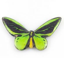 Paper print goliath butterfly green