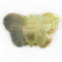 Blacklip butterfly