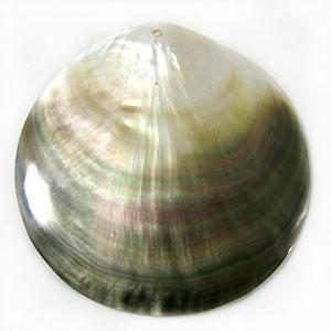 Blacklip shell 90mm round