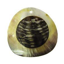 Blacklip shell 40mm round embossed