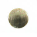 Blacklip shell round 25mm plain