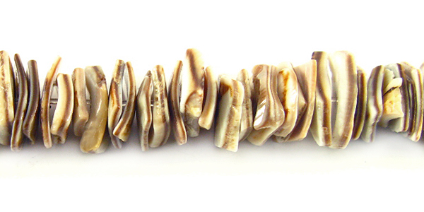 Voluta shell Crazycut beads