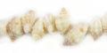 Orange nutmeg shells