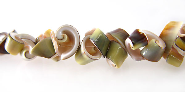 Exotica rose shell medium cut
