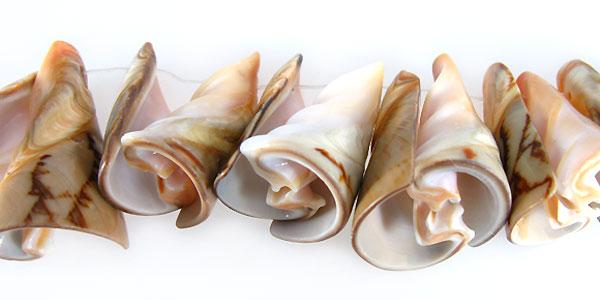 Voluta shell trumpet