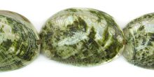 Abalone shell green