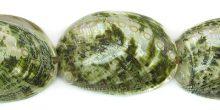 Abalone shell green