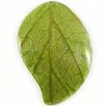 Coconut shell back mango design w/ Cab-Caban leaf 55mm