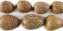 Bettle Nut Palm Seed 13-21mm