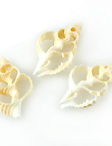 Natural skeleton shells wholesale